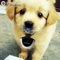 Para animais, Gato, Cão, Promoção, Poupança