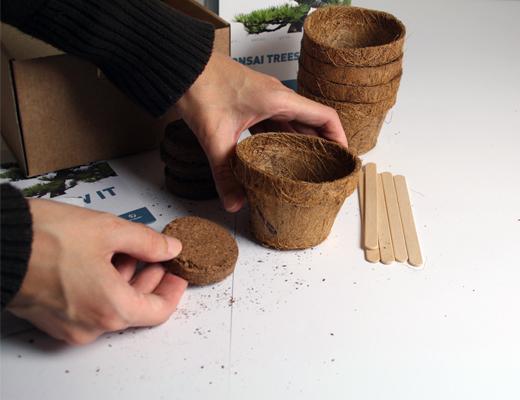 Grow It: Bonsai