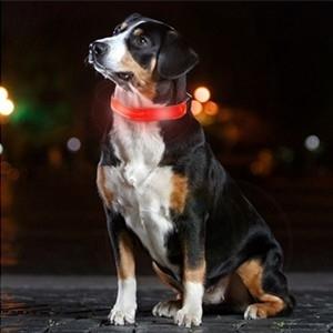 Coleira para Cão LED (Entrega em 24h)