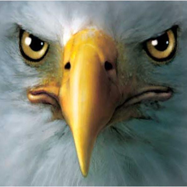 T-Shirt Face Águia