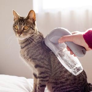 Aspirador Pêlo Pet Vacuum (Entrega em 24h)