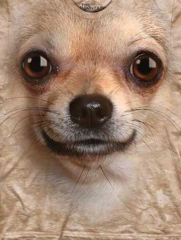 T-Shirt Face Chihuahua