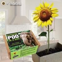 Eco, Natureza, Plantas, Planta em Casa, Primavera, Flores, TOP10Abril14, Amigo secreto, Em familia, Dia da Criança