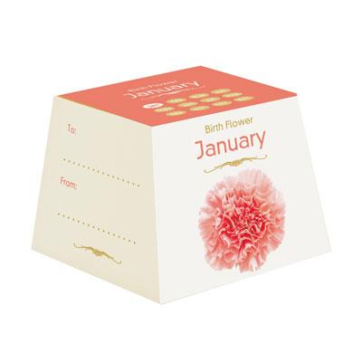 Flores de Aniversário - Janeiro