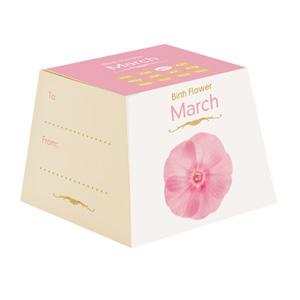 Flores de Aniversário - Março (Entrega em 24h)