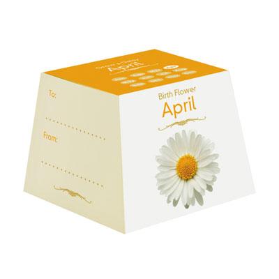 Flores Aniversário - Abril