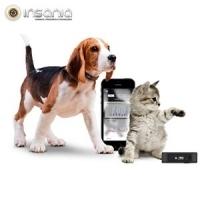 Para animais, Gato, Cão