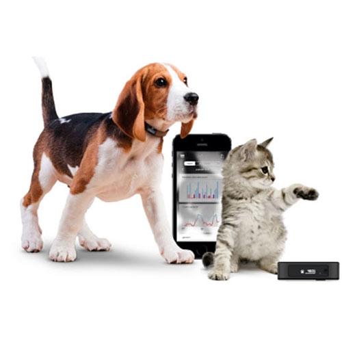 Tracker de Atividade Petbit Tractive