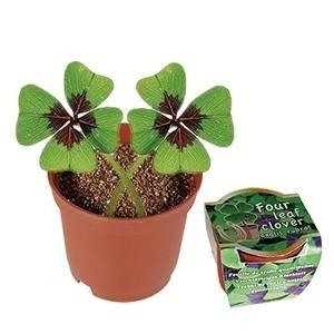 Planta Em Vaso Trevo (Entrega em 24h)