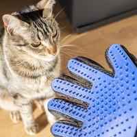 Animais de Estimação, Para animais, Animais, Cão, Gato, Pêlo