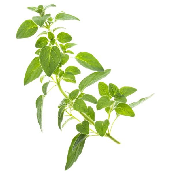 Conjunto de 4 tipos de sementes Tregren